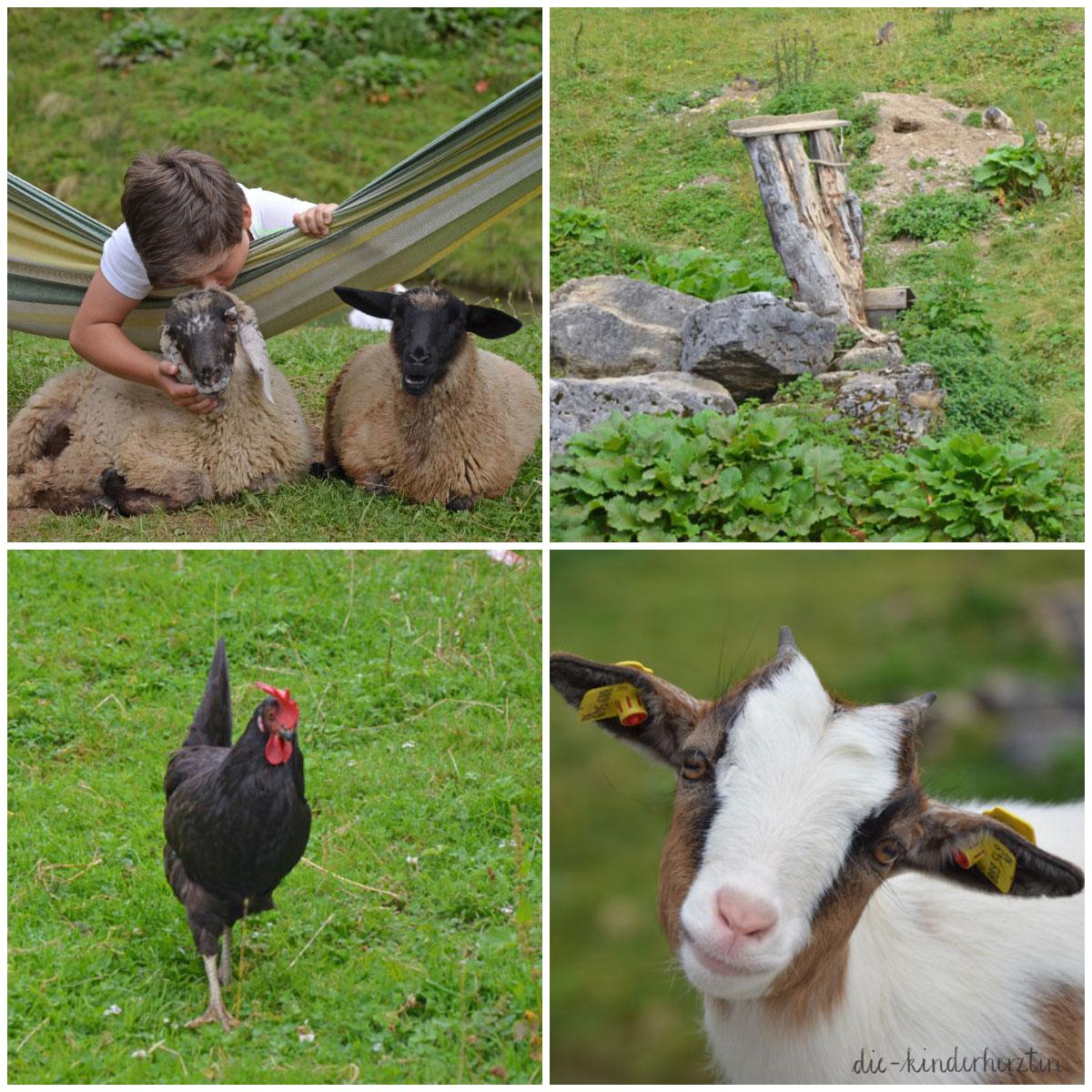 Arthurhaus Fernweh Reisen Österreich Streichelzoo Schafe, Ziegen, Hühner und Murmeltiere