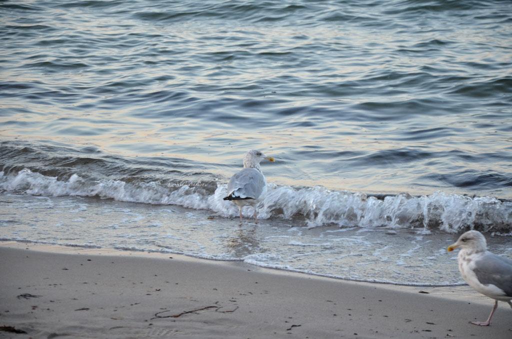Ostsee Meermomente Möwen am Sandstrand