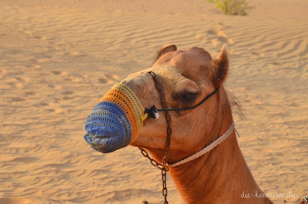 Dubai Wüste Kamel