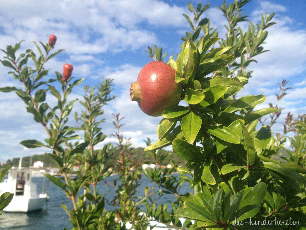 Kroatien Granatapfel