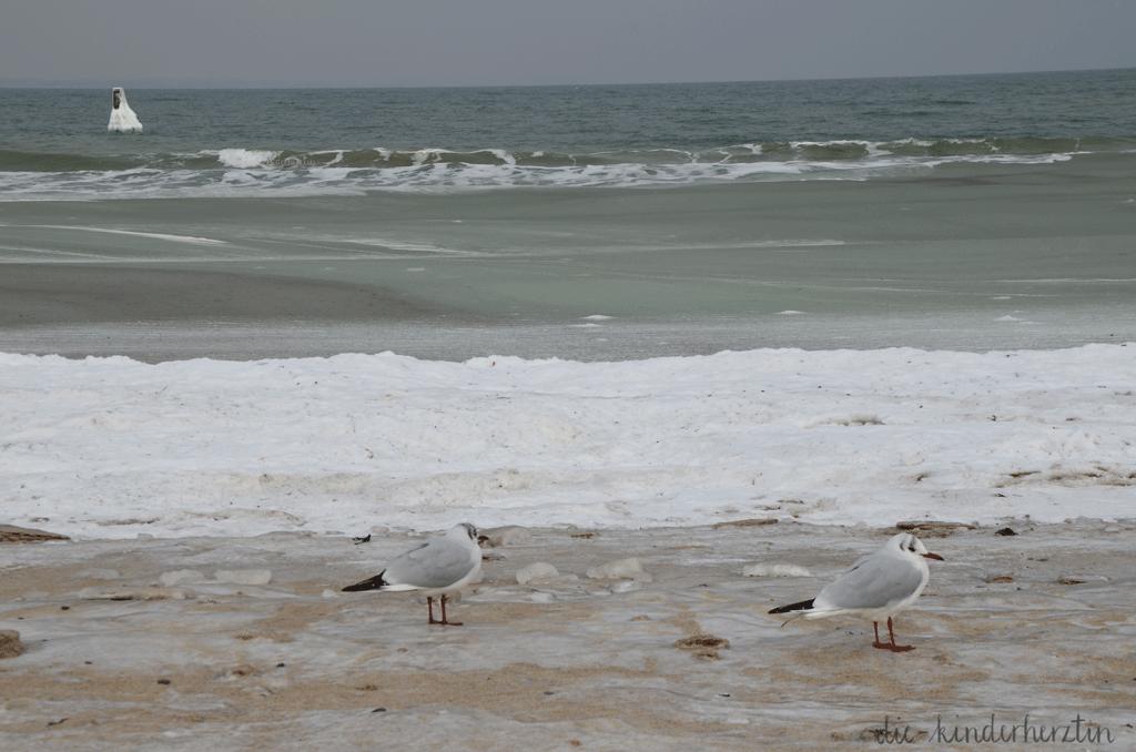 Ostsee im Schnee- und Eisgewand, Halbgefrorenes Meer, Wellen und Möwen auf verschneiter Küste