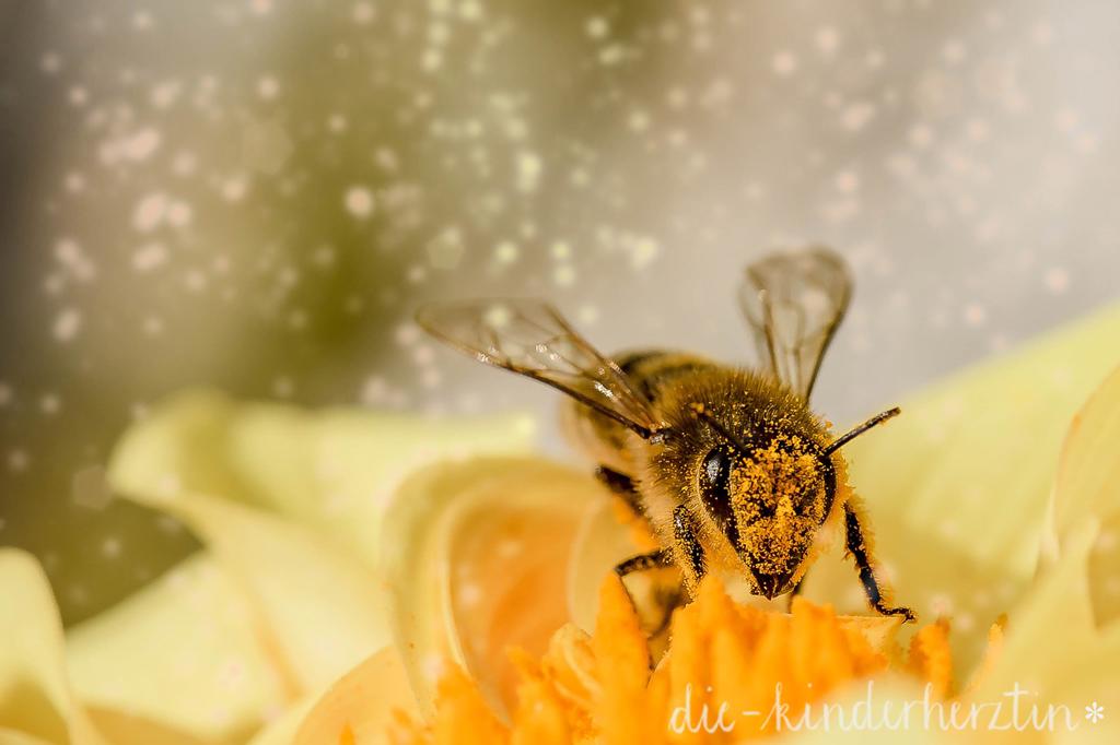 Biene und Blütenpollen